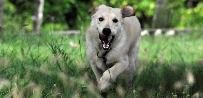 Casas rurales con perro en cantabria alquiler con mascotas - Casa rural con perro madrid ...
